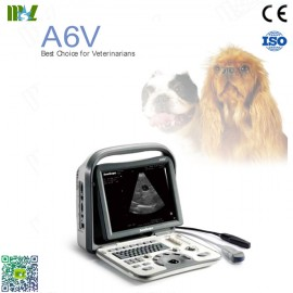 ultrasonido veterinario